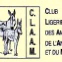 Fête de l'âne Châteauneuf sur Loire (45)
